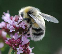 Nisthilfen für Bienen
