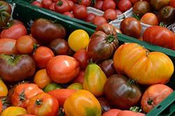 Alte und neue Tomatensorten