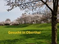 Suche Streuobstwiese in 66649 Oberthal zur Pacht oder zum Kauf