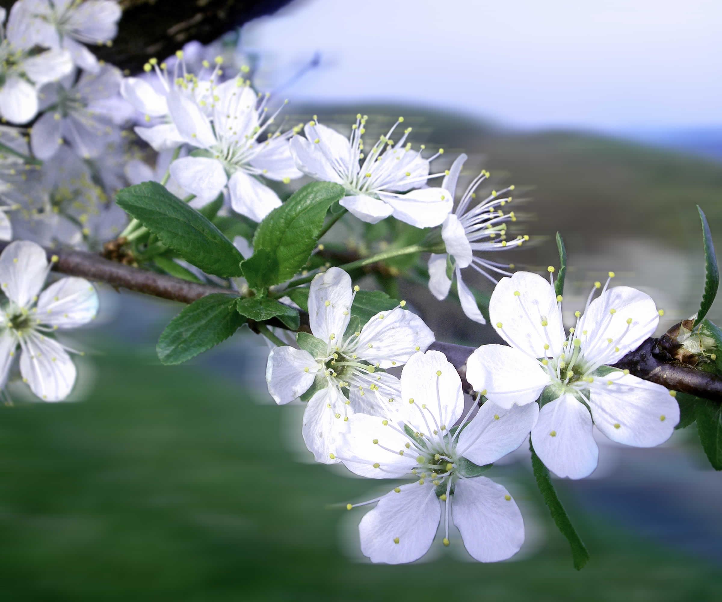 Klettergerüste Für Rosen : Der himmel voller rosen juni familienheim und garten