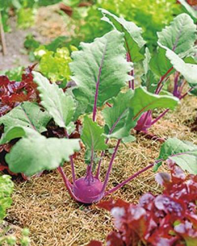 Unser Garten Verlag Gemüsegarten Mischkulturen