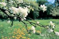 Apfelbäume: Die richtige Unterlage