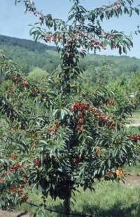 Bokashi-Saft