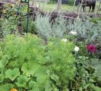 Zu einem Bauerngarten passen Tatholzstrukturen gut. Hier wurden sie nur an der windexponierten Seite verwendet, sonst tut es ein Staketenzaun