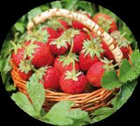 Aromatische Erdbeeren