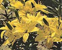 Zierpflanzen: Robust und edel